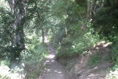 Path to Denholme Wood