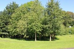 Trees fringe the Recreation Ground