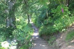 Path to Deneholme Wood
